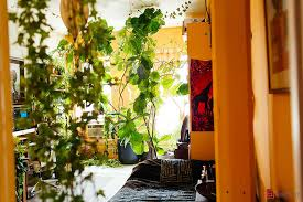 apartment plants woman transforms her brooklyn apartment into an urban jungle with