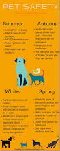 best 25 dog safety ideas on pinterest what to feed dogs dog