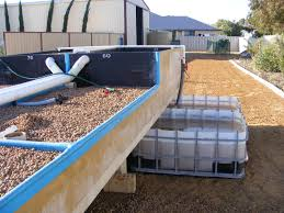 backyard aquaponics u2022 view topic update from geraldton wa