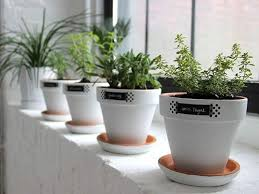 Window Sill Herb Garden Designs Ingenious Inspiration Ideas Herb Garden Pots White Windowsill