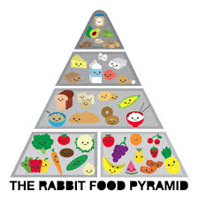 rabbit food the rabbit food pyramid rabbit food for my bunny teeth