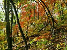 southeast ohio fall foliage trekohio