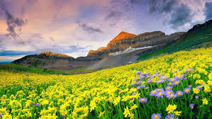 beautiful landscape spring meadow with yellow and purple flowers