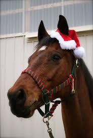 102 best horse christmas images on pinterest merry christmas