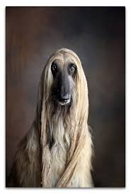 afghan hound therapy dog adar the afghan hound actor based in southern california los