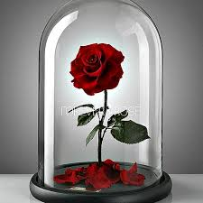 rose in glass belle rose beauty and the beast rose in glass on the hunt