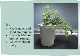indoor plants that you can u0027t u0027kill u0027 easily
