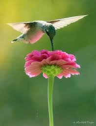 Flowers For Birds And Butterflies - 56 best gardening birds bees butterflies images on pinterest