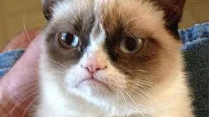 Meme Picture Editor - public editor you may know grumpy cat but can you explain what a