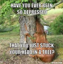 Tree Meme - 140 best forest images on pinterest insects meme and forests