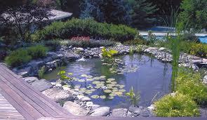 Aquascapes Of Ct Oasis Aquascapes Inc
