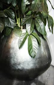 Home Decoration With Plants by 107 Best Tropical Green Images On Pinterest Tropical The