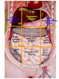Anatomy Of Human Body Organs Best 25 Physiology Ideas On Pinterest Human Anatomy And