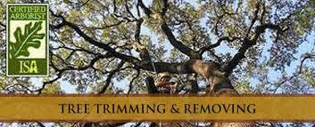 scinto tree company llc home