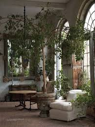 7 potted plants to create the indoor oasis oasis plants