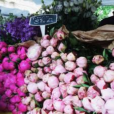 Flower Shops Inverness - 105 best peonies my favorite images on pinterest pink