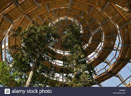 tree platform 44 metres high the world s tree top walk