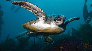 sea turtles marine fish and reptiles
