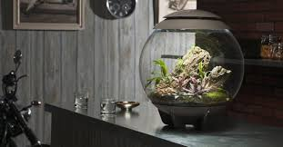 biorb terrariums for offices low maintenance plant displays