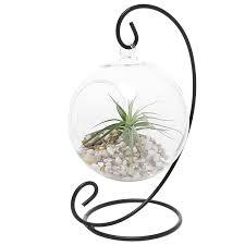 Hanging Plant Amazon Com Charming Clear Glass Hanging Planter Terrarium Globe