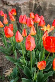 Okc Botanical Gardens by Myriad Botanical Gardens Oklahoma City Top Tips Before You Go
