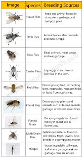 Eliminate Mosquitoes In Backyard by 35 Ways To Get Rid Of Flies U0026 Keep Them Away Forever