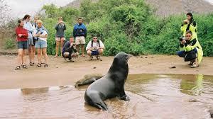 California wildlife tours images Galapagos christmas vacation christmas tours adventures jpg
