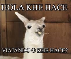 Alpaca Meme Generator - meme creator ola ke ase meme generator at memecreator org