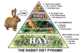rabbit food best rabbit food food