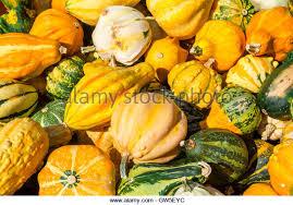 gourds gourd ornamental stock photos gourds gourd ornamental