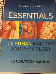 Human Anatomy And Physiology Lab Manual Marieb Pearson Prentice Hall Brother Rice Bookstore