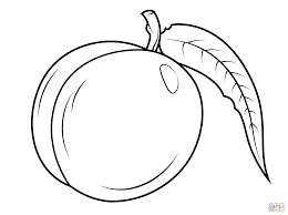 nectarine with leaf coloring page free printable coloring pages