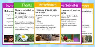 vertebrates or invertebrates cards vertebrate invertebrate