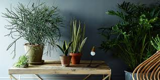 5 no kill houseplants for any home huffpost