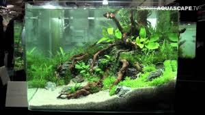 Nano Aquascaping Aquascaping Qualifyings For The Art Of The Planted Aquarium 2015