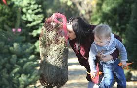 why inland christmas tree farms struggle to survive u2013 press enterprise