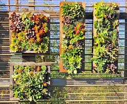 best 25 succulent wall gardens ideas on pinterest succulent