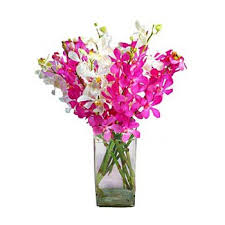 pink orchids dubai splendid orchids flower delivery 8 mixed white and