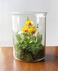 succulent terrarium succulents pinterest terraria