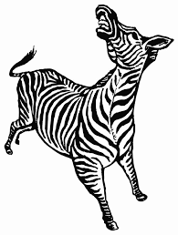 zebra bucking printable image illustration sketch for zebra