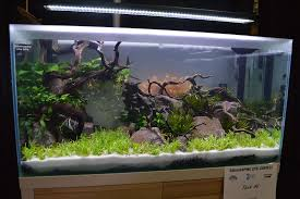 aga aquascaping live 2016 entry 6 planted tanks pinterest