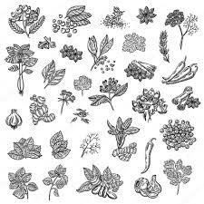 les herbes de cuisine grande collection de différentes épices et herbes épices naturelles