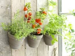 how to grow your own vegetables in your garden in the uae