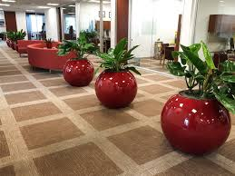 north park lexus san antonio jobs portfolio test plant interscapes indoor office plants