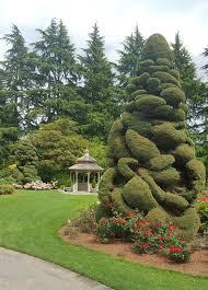 ciao newport seattle woodland park garden