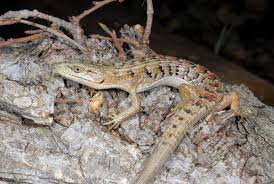 Seeking Lizard Cast U S Herping Hotspots From East To West