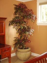 Fake Plants For Home Decor Custom Made Artificial Trees Decor And More Pinterest