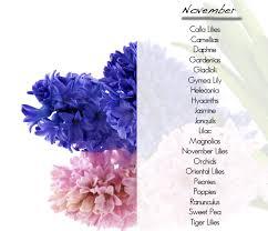 november flowers what flowers are in season november