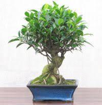 corporate gift ideas bonsai trees