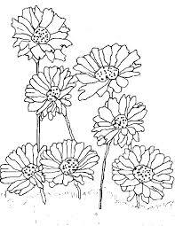 daisy coloring pages u2013 vonsurroquen